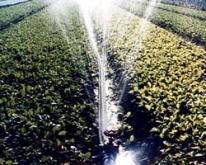 噴水管灌溉系統