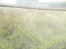 吊式噴帶 (鋼索吊式造雨帶)