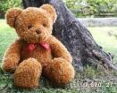 泰迪熊絨毛玩具