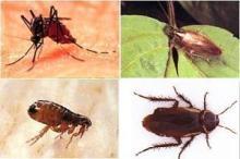 蚊蝇/蟑螂/跳蚤防治