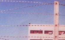 直线型刀片刺网