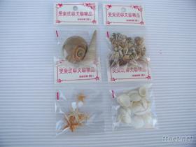 10元貝殼