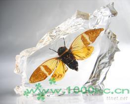 人造昆蟲琥珀台飾﹘千年情系列金蟬展翅