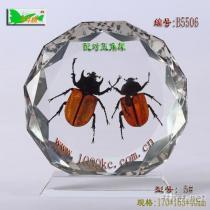 昆蟲琥珀台飾﹘千年情台飾精品