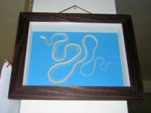 蛇類骨骼標本