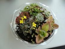 盆花自動給水組