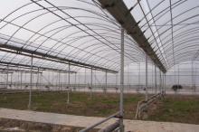 溫室大棚|溫室採光