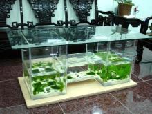 桌型生态鱼缸