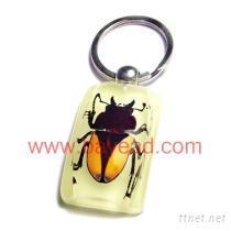 全國品質最好的昆蟲琥珀生產供應商