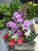 蘭花盆花, 祝賀盆花