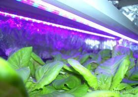 植物生長燈