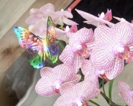 金屬蝴蝶裝飾品