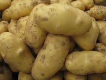 出口级新鲜土豆