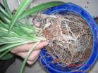Artificial Soil