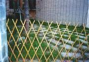 대나무 담
