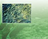 Meerespflanze-Garn