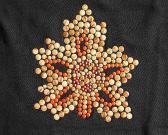 Cequi del color del grano en diseño de la hoja