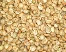 Luwak 커피 콩