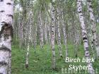 Birch bark Extract (Betulin & Betulinic acid)