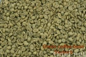 Green coffee bean Extract /Chlorogenic acid