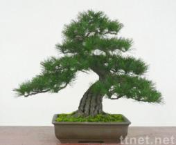 Bonsai Artificial artificial bonsai