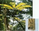 Magnolia P.E