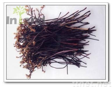 Fern,Ferns,Bracken,Pteridium aquilinum,Bracken Fern