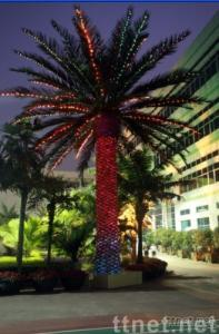 PHOENIX CANARIENSIS TREE WITH LED LIGHTS