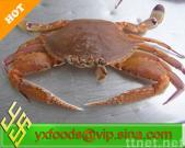 Frozen Crab(Portunus haani)