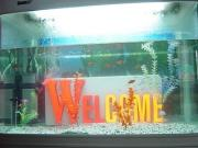 LED Epoxy Letter - Welcome