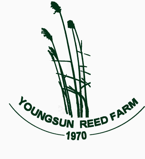 Youngsun Reed Limited