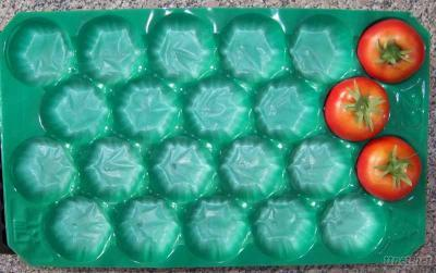Pp Tray For Tomato