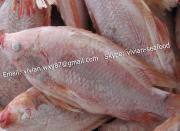 Frozen Red Tilapia Gutted and Scaled (Oreochromis Niloticus)