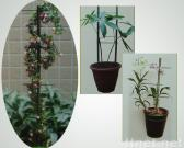 Extending Plant Support