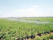 Spray Boom AS26 Irrigation Machine