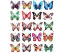 Noctilucent Butterfly or Luminous Butterfly Fridge Magnet