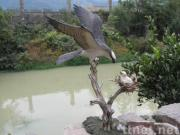 Open-winged Osprey/Wood Carving