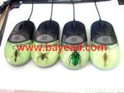 Real Insect Amber optical mouse,novel mouse,Promotion Gift