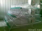 Chicken Growing Cage